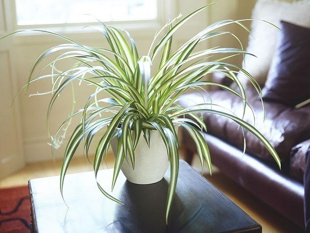 Déco intérieur avec des plantes vertes