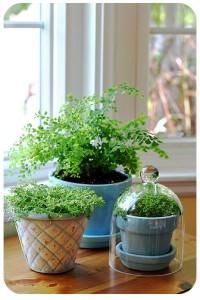 Déco maison avec des plantes d'intérieur