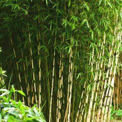 D co avec des plantes archives plantes et d co plantes et d co - Bambou croissance rapide pour haie ...