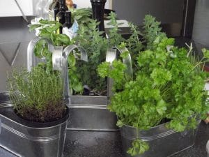 plantes-deco-vente-maison-1