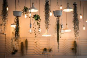 plantes-deco-vente-maison-2