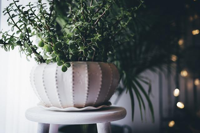 plantes-deco-vente-maison-3