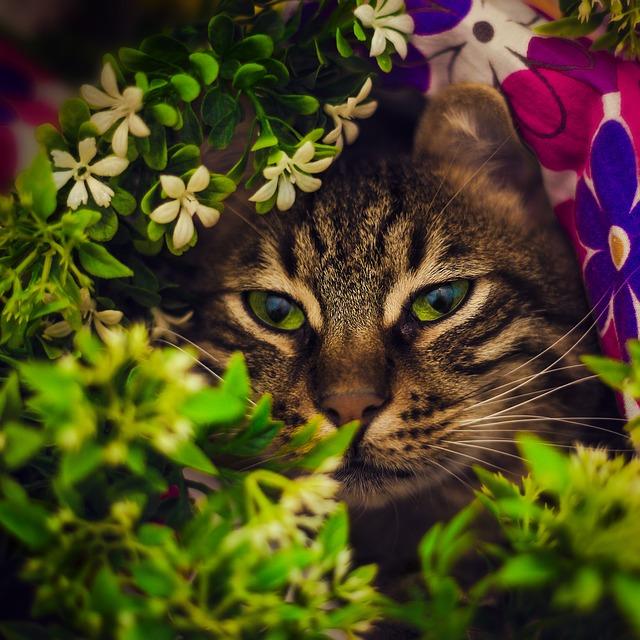 plantes-dangereuses-plantes-1