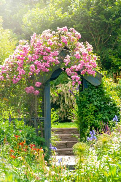 Arche fleurie allée jardin