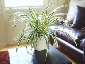 Décoration avec des plantes vertes