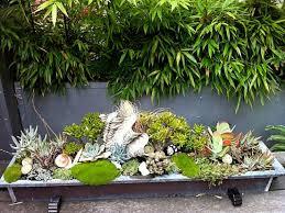 Types de plantes succulentes