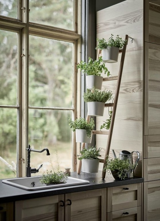 plante-intérieur-cuisine