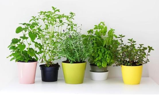 plantes-aromatiques-cuisine