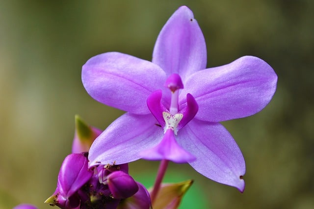 orchid-213171_640