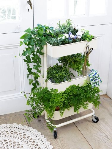Un jardin sur roulette pour vos plantes d'appartement
