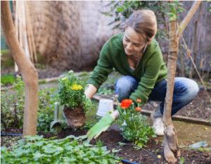 Femme plantant des fleurs dans son jardin