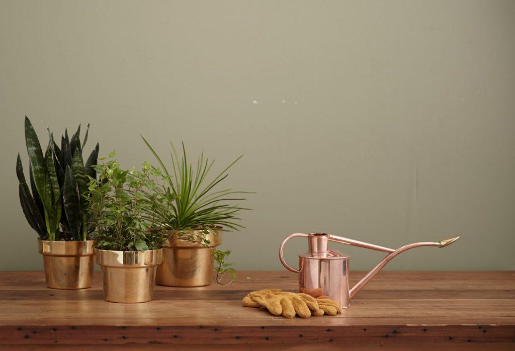 Arrosoir en cuivre rempli avec de l'eau du robinet pour arroser des plantes en pot