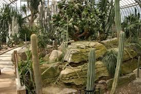 lumière plante succulente
